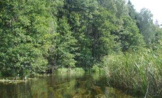 Rzeka Wda – co warto o niej wiedzieć?
